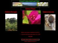 TAHITI MACROPHOTO
